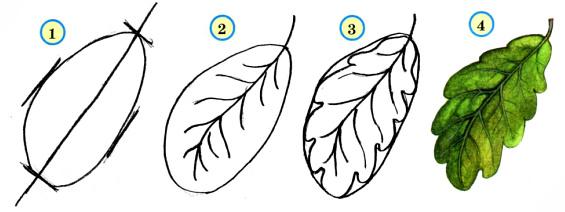 Поэтапное рисование листьев осины