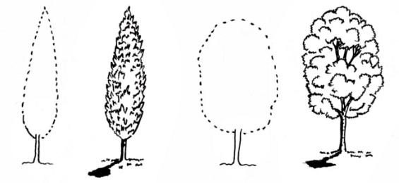 Схема рисования листьев, веток