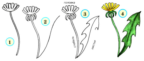 Схемы рисования цветов