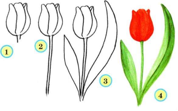 6. Нарциссы – белые с жёлтой